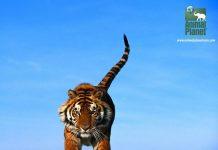 animal-planet-hd-na-sky