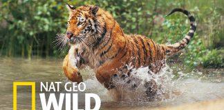 nat-geo-wild-novo-canal-sd-na-claro-tv